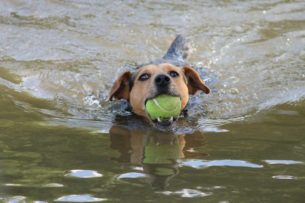 dog-playing-water-ball #Good #Famous #Police #Girly #Ideas #Literary #Old #Alcohol #Pitbull #Fancy #Outdoor #Original #Red #Hound #Human#Harry Potter #Uncommon #Clever #Unusual #Nerdy #Small #Irish #German #Best #Mexican #Spanish #Hippie #Hawaiian #Western